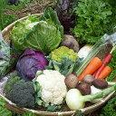 【ふるさと納税】【12~13品】あいちゃん農園の「よしのがり野菜」セット(レギュラー) [FAA005]