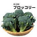 【香川県産】ブロッコリー 1株 約500g【野菜詰め合わせセットと同梱で送料無料】【送料別】