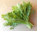 収穫したその日に発送します『春菊』、除草剤不使用・有機質の肥料で育てました。