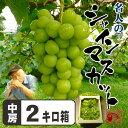 岡山県産 名人のシャインマスカットたっぷり2キロ箱 送料無料