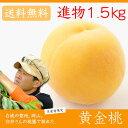 臼井桃園 黄金桃 進物用 1.5Kg 4〜6玉 栽培園限定商品 送料無料 希少品のため収穫予定数量完売と同時に販売終了致します