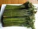[クール便発送]山菜 【生わらび】 3kg【アグリコマガタ】