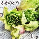 2021年予約 3月上中旬〜出荷予定天然山菜・ふきのとうまとめて1kg(大小バラ詰め)※送料別(クール便)