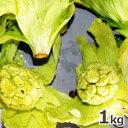 2021年予約 3月上中旬〜出荷予定天然山菜・開きふきのとうまとめて1kg(大小バラ詰め)※送料別(クール便)