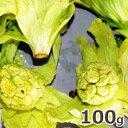 2021年予約 3月上中旬〜出荷予定天然山菜・開きふきのとう100g(大小バラ詰め)※送料別(クール便)