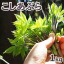 予約販売天然・コシアブラ(10cm以下) まとめて1kg(大小バラ詰め)【4月中旬〜発送予定】※送料別(クール便)