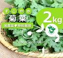 菊菜 春菊 農薬90%カット 特別栽培【2kg】