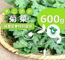 菊菜 春菊 農薬90%カット 特別栽培【600g】