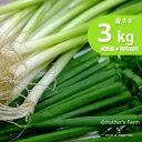 青ネギ あおねぎ ネギ 農薬90%カット 特別栽培【3kg】