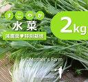 水菜 農薬90%カット 特別栽培【2kg】