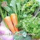 【お中元】野菜セット 詰め合わせ お試しセット 農薬不使用 訳あり 不揃い【送料無料】