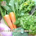 野菜 詰め合わせ 納得セット 農薬不使用 訳あり 不揃い【送料無料】