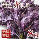 赤しそ 枝付き 2kg 8束 梅干し用 赤紫蘇ジュース用 福岡県芦屋産 産地直送【送料無料】