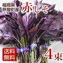 赤しそ 枝付き 1kg 4束 梅干し用 赤紫蘇ジュース用 福岡県芦屋産 産地直送【送料無料】
