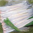 あなご 穴子 フィレ【約50〜60g×10枚入りアナゴ】冷凍食品 食品 業務用 家庭用 魚介 食べ物