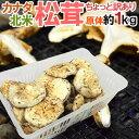 """カナダ・北米産 """"松茸"""" 約1kg 原体・ほんのちょっと訳あり 大きさおまかせ【予約 9月中下旬以降】 送料無料"""