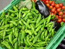 送料無料!冷蔵便込!北海道産四季のとれたて野菜詰め合わせセットたっぷり15種類入り