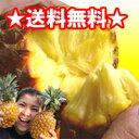 【送料無料】沖縄産スナックパイン(ボゴールパイン)2.5kg前後(2〜4個)産直価格!でお届け♪話題のパイナップル