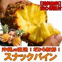 スナックパイン 沖縄産 パイナップル 約1.5kg 送料無料自社管理農園から直送だから安心保証付き沖縄産フルーツ パイナップルの通販はお任せ下さい 父の日 ギフト