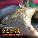 匠が育てた極上のブリ 鰤 カマ3個〜4個 600g以上 照り焼き、カマ塩焼きなど数々の料理におすすめです。