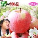 葉っぱの影は甘さのサイン 【葉とらずりんご ふじ(有袋)ファーム2kg】家庭用(5-9玉) 青森産 リンゴ 林檎 アップル 訳あり 青森りんご [※産地直送のため同梱不可]「GOLD」