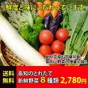 とれたて野菜 8種類セット詰め合わせ 高知産 レシピ・追加機能付き 送料無料 [Qv10]