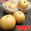 訳あり 鳥取県産 新興 梨 5kg 6〜18玉 お試し 梨 なし 送料無料 お歳暮 ギフト