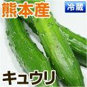 ■ 熊本県産 キュウリ ■ ( 熊本 宇土 産) 3〜4本 【 野菜セット同梱で送料無料 】【 九州 実 野菜 きゅうり 胡瓜 】