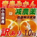 【送料無料】減農薬 青島みかん 訳あり 10kg 規格外 激安ミカン