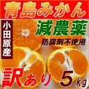 【送料無料】減農薬 青島みかん 訳あり 5kg 規格外 家庭用 みかん 激安