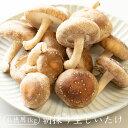 朝採り生しいたけ【お徳用 1kg】| 生シイタケ 生しいたけ 生椎茸 国産 菌床しいたけ 送料無料 通販限定