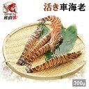九州天草産 活き車海老300g(9-15匹入) 送料無料 天草活きクルマエビA 海老 生き