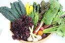 【ふるさと納税】[010-110]あらいふぁーむ 美瑛の野菜詰合せ