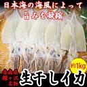 【ふるさと納税】青森県鰺ヶ沢町 生干しイカ 5枚セット ※お申込みから3ヶ月以内の発送になります。青森 イカ いか 国産 魚介