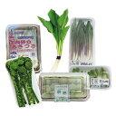 【ふるさと納税】山形県産 山菜セット F2Y-0706