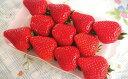 【ふるさと納税】イチゴ(あすかルビー) 【果物類・フルーツ・果物類・いちご・苺・イチゴ】 お届け:2020年1月中旬〜3月末まで