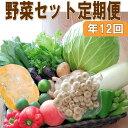【ふるさと納税】定期便 旬の新鮮野菜セットA【毎月お届け12回】たっぷり15品以上
