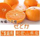 【ふるさと納税】■柑橘の王様 和歌山有田の濃厚せとか (ご家庭用)※2021年3月上旬頃より順次発送予定