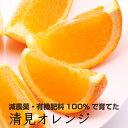 【ふるさと納税】特別栽培清見オレンジ4.5kg 【有機肥料100%・減農薬栽培で育てました】【きよみオレンジ】