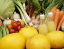 【ふるさと納税】『定期便』土佐野菜の詰め合わせ 全12回
