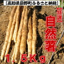 【ふるさと納税】田野産特選「自然薯(じねんじょ)」1.5Kg 全然粘りが違います汁物にしても溶けない粘りの強さを是非ご賞味ください。