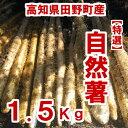 【ふるさと納税】≪予約受付中≫四国一小さなまち田野町産特選「自然薯(じねんじょ)」1.5Kg 全然粘りが違います。汁物にしても溶けない粘りの強さを是非ご賞味ください。