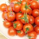 【ふるさと納税】真子のミニトマト(1,3kg)味の濃い ビタミン豊富 完熟 プチトマト 特別栽培 新鮮 採れたて 佐賀県産 送料無料
