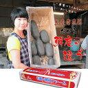 【ふるさと納税】大人気!佐賀県産泥付きレンコン(3kg) 送料無料 農家直送 続々高評価