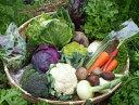 【ふるさと納税】【定期コース】よしのがり野菜セットラージ(H01)