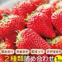 【ふるさと納税】長崎県産 旬のいちご 1kg 苺ファンへ贈る 食べ比べセット (250g×4パック)
