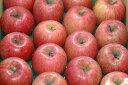 減農薬 長野 サンふじ りんご A品 約4.5kg 12〜23個入 リンゴ 林檎 産地直送 小山