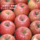 訳あり 減農薬 長野 サンふじ りんご 約9kg 24〜50個入 リンゴ 林檎 産地直送 小山