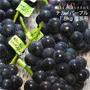 高糖度21度 低農薬 ナガノパープル ぶどう 1.8kg 3〜4房 贈答用 化粧箱入 ブドウ 葡萄 産地直送 mi