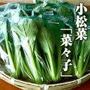 小松菜「奈々子」120g 伊勢志摩産・水耕栽培